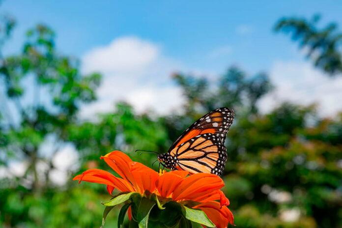 En Colombia está el 20 % de las especies de mariposas en el mundo
