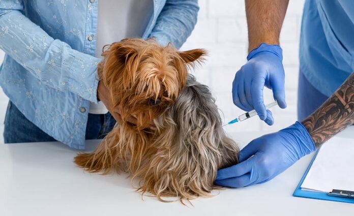 Gran Jornada de Vacunación de perros y gatos en Antioquia este 27 de junio