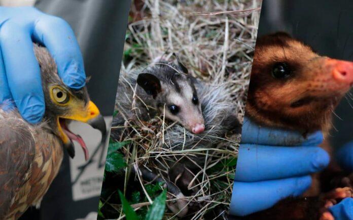 Liberan a 38 animales rescatados en Medellín y el Valle de Aburrá