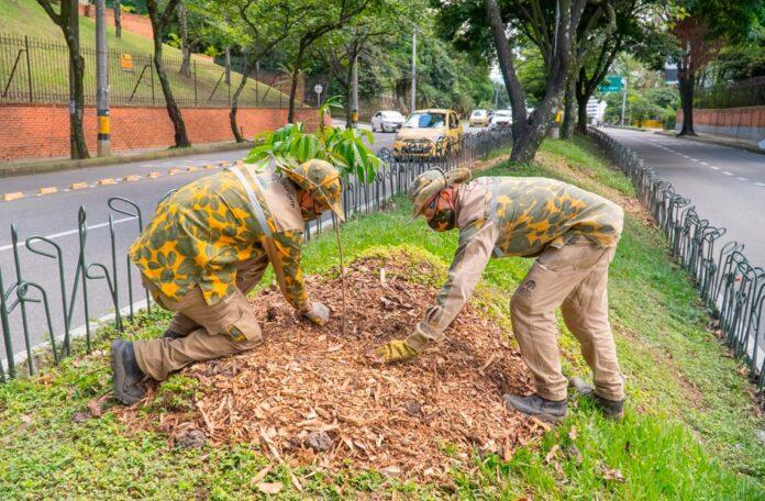 Medellín reverdece con la siembra de nuevos árboles y jardines