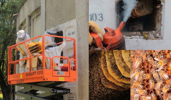 En Medellín Rescatan 120.000 abejas y 30.000 avispas en el Cementerio Universal