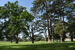 Blenheim Palace TIno Sehgal 2021- Carta desde la selva