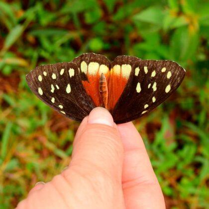 Ocho nuevas especies, cinco mariposas y tres aves, fueron avistadas en la reserva natural Alto de San Miguel en Medellín