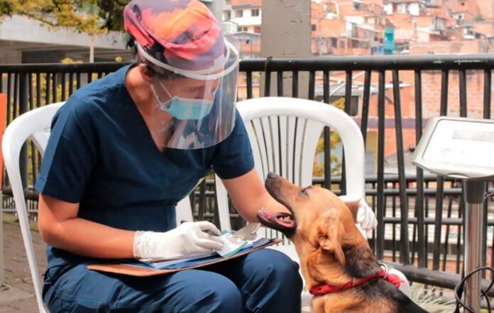 Jornadas de esterilización de perros y gatos en Medellín y el Valle de Aburrá