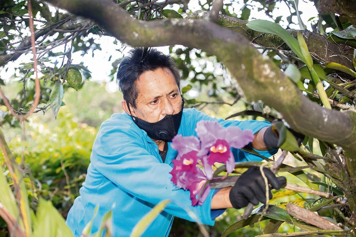 """Oscar Hernández, jardinero de Casablanca desde 1975, dedicado a los agapantos y orquídeas de """"la señorita Débora""""."""