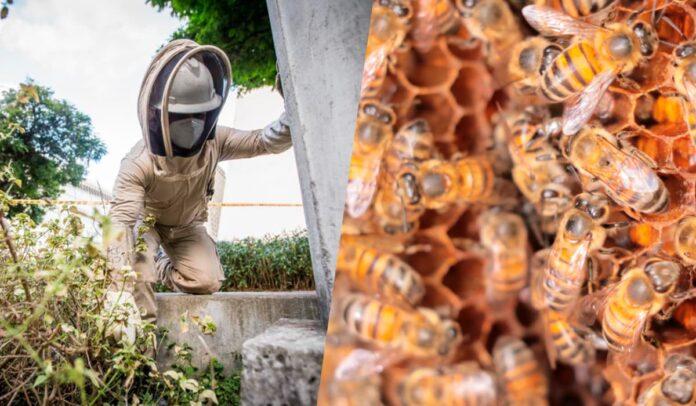Recomendaciones para evitar incidentes con abejas en temporada seca