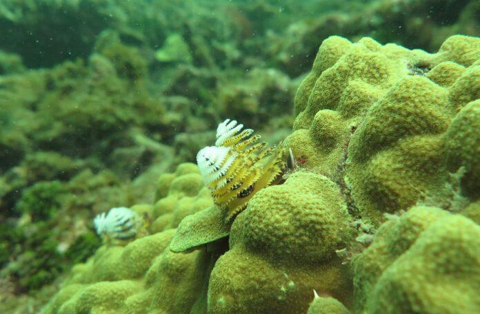 Universidad CES y la preservación de los arrecifes coralinos en el Caribe colombiano