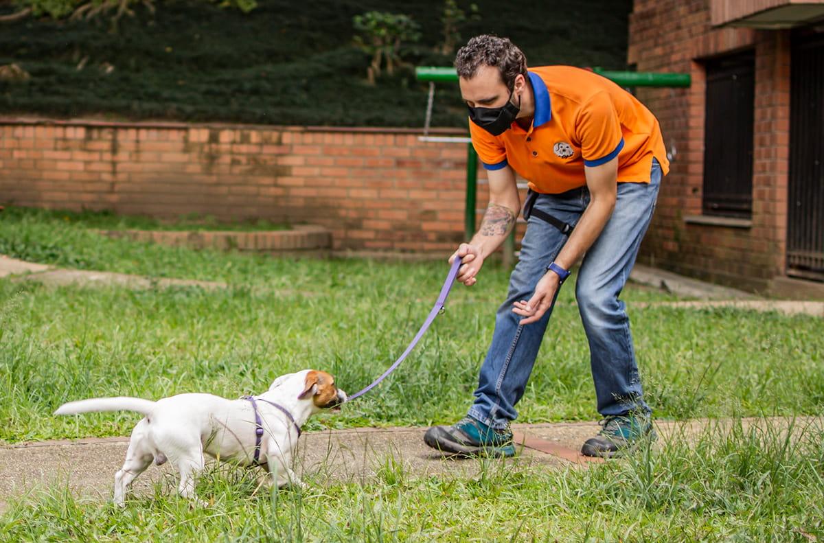 Educación canina en Medellín