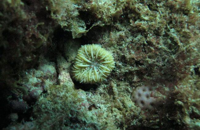 Con buceo nocturno, investigadores de la Universidad CES trabajan por la preservación de los arrecifes coralinos en el Caribe colombiano.