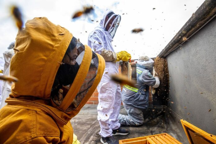 Abejas africanizadas fueron rescatadas de un edificio en El Poblado