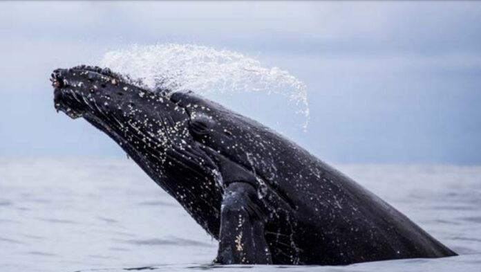 La Agenda del Mar amplía fecha de su concurso de fotografía