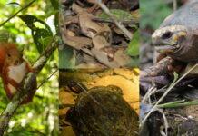 Liberados 43 ejemplares de fauna silvestre en Antioquia