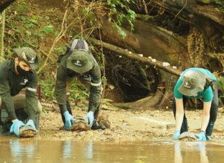 50 tortugas de agua dulce fueron liberadas en el Magdalena Medio antioqueño