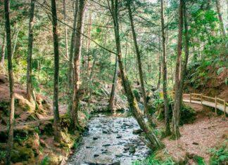 Expedición Mitológica en el Parque Arví