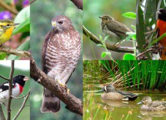 Festival de las Aves de Medellín- Pajariando en comunidad