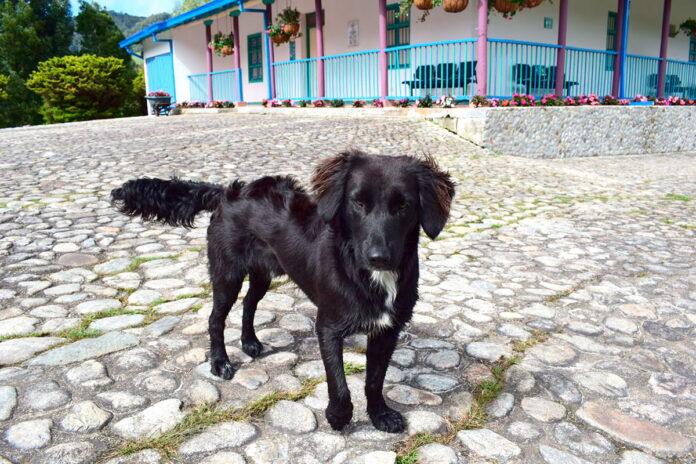 Tambo, el perro guardián del Parque Ambiental Los Tambos en La Ceja (Antioquia)