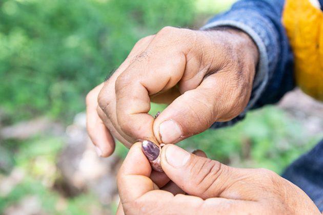 La semilla debe quedar limpia para sembrarse.