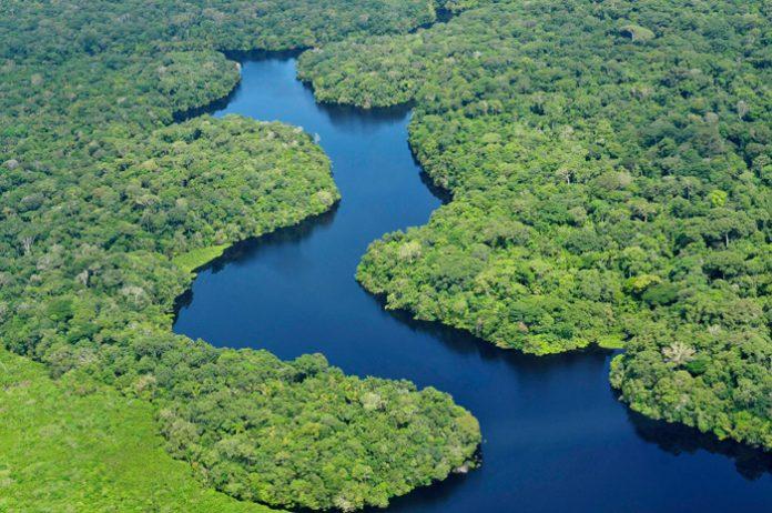para enfrentar el cambio climático y abordar la escasez de agua potable es la conservación y reparación de los bosques.