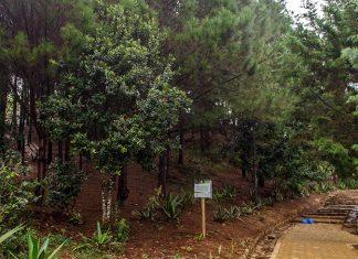Rutas mitológicas en el Parque Arví