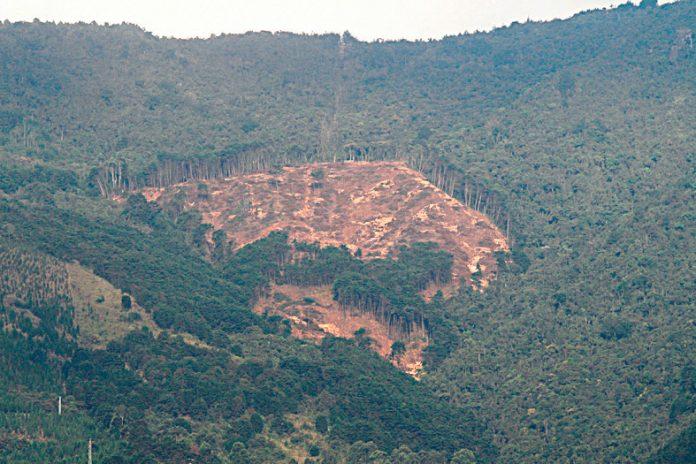 Además del aire contaminado por el tráfico automotor en un 66%, y procesos industriales en un 31%, las laderas de El Poblado son deforestadas.