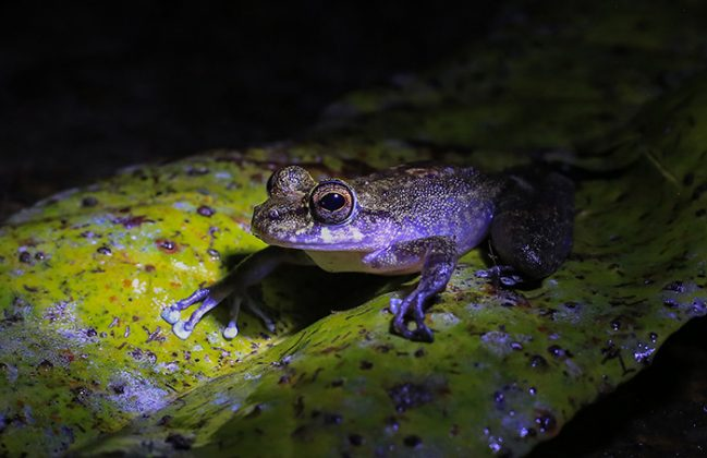 Expedición de Eafit halló nuevas especies en Anorí