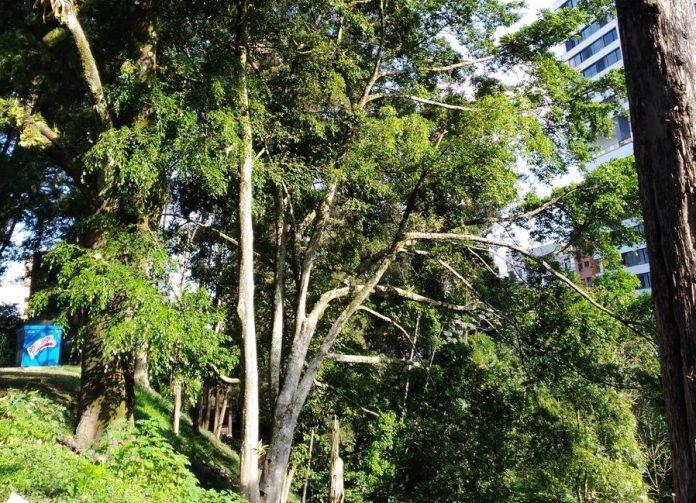 Tala de árboles en San Lucas