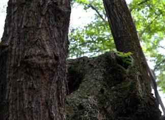 352 árboles se han caído en El Poblado en 30 meses