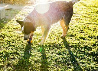 El parque de las mascotas Mascotas en Ciudad del Río