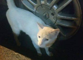 Gato en el barrio Patio Bonito