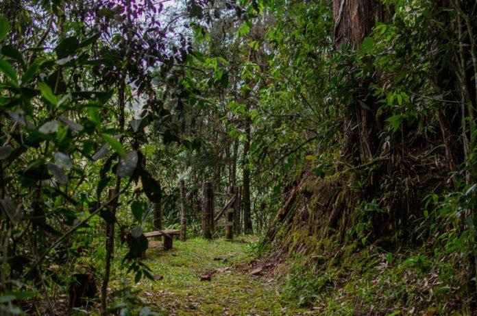 Madremonte, tras los bosques del Oriente Antioqueño