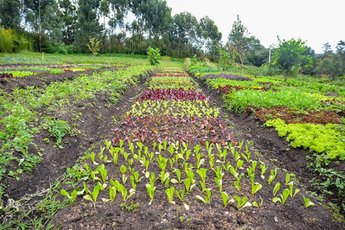 Oriente Tierra de agricultores
