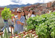 Cultivos hidropónicos en Terrazas verdes en Medellín
